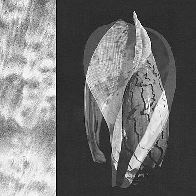 yolabmi - Life In A Shell